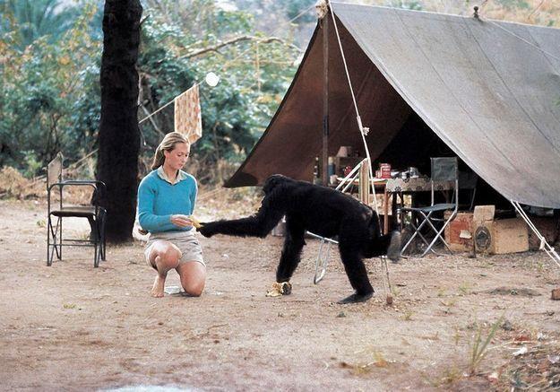 Pandémie: le message d'espoir de Jane Goodall, la spécialiste des chimpanzés