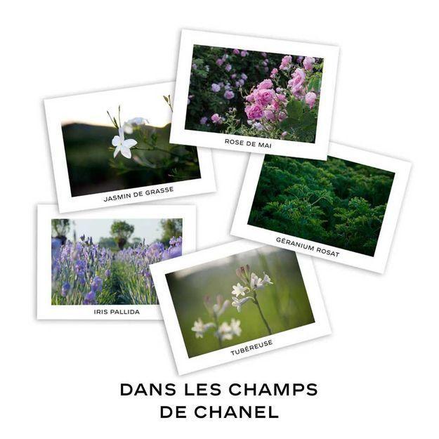 #ELLEBeautySpot : Chanel reconstitue ses champs de Grasse aux Tuileries pour quelques jours !