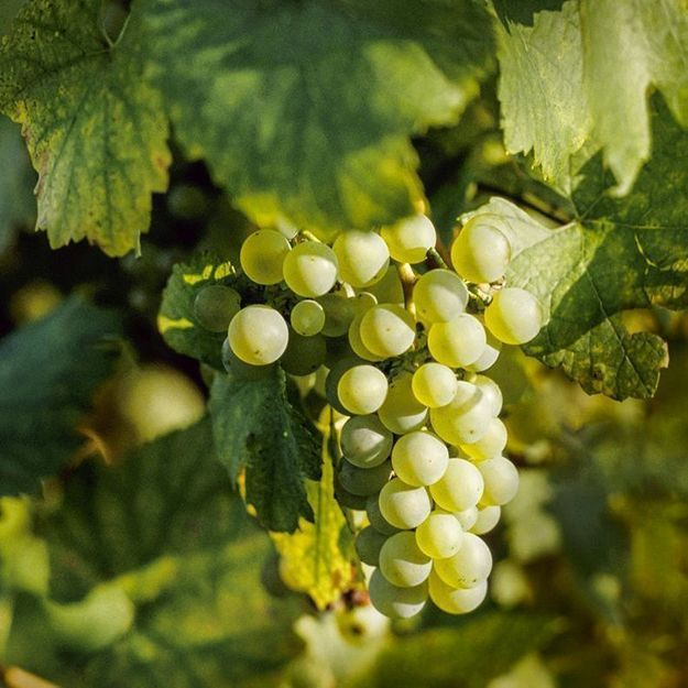 Comment choisir son vin écologique ?