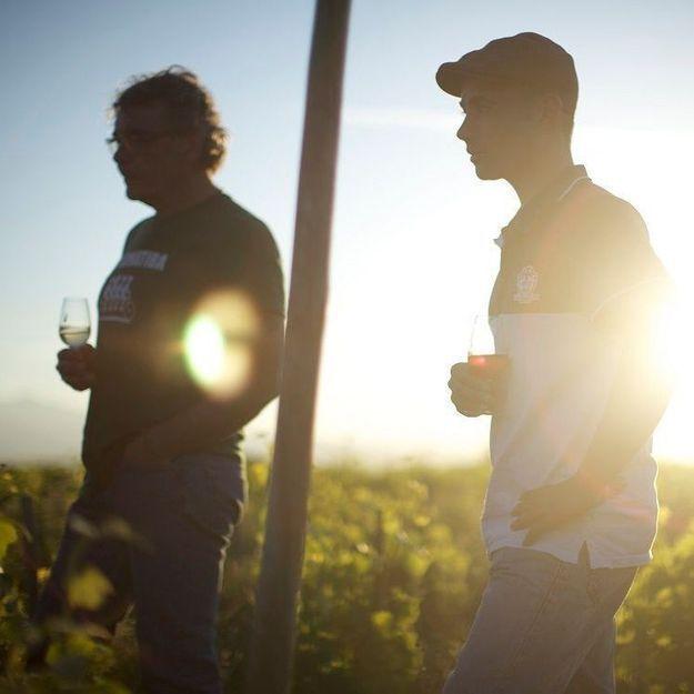 Cinéma : On fonce voir « Wine Calling » le film qui raconte les vignerons