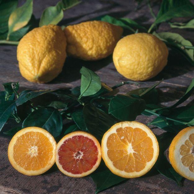 Voici l'astuce incroyable pour presser un citron sans le couper