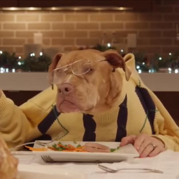 L'anti-blues du dimanche soir : des animaux à table pour Noël