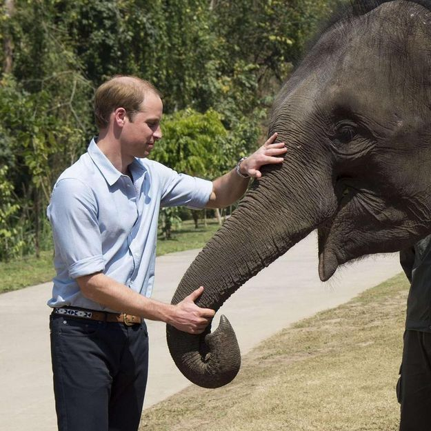 Le prince William en Chine, dans la vallée des éléphants