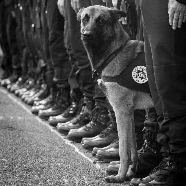 Assaut à Saint-Denis : polémique sur les réseaux sociaux autour du chien policier tué
