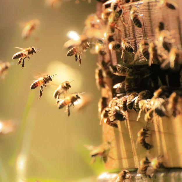 Comment protéger les abeilles à son niveau ?