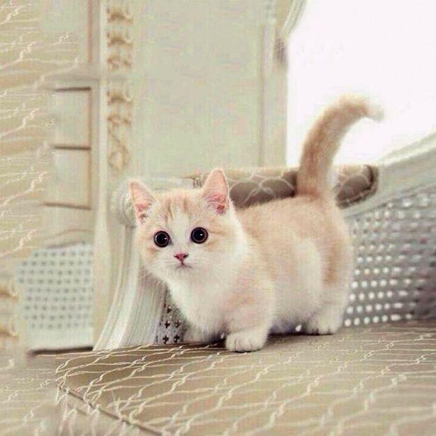 Phénomène : que cache notre addiction aux images de chatons ?