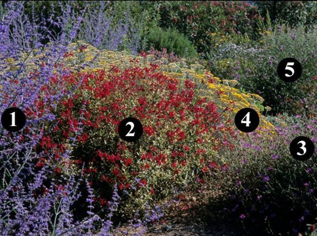 Des idées de plantes pour un jardin sec