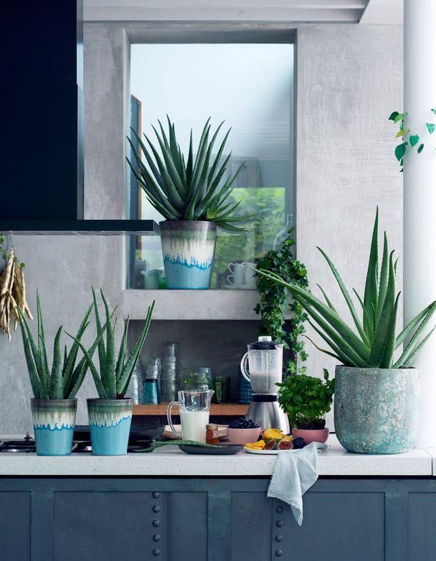 Zoom sur une plante résolument bienfaisante : l'Aloe Vera