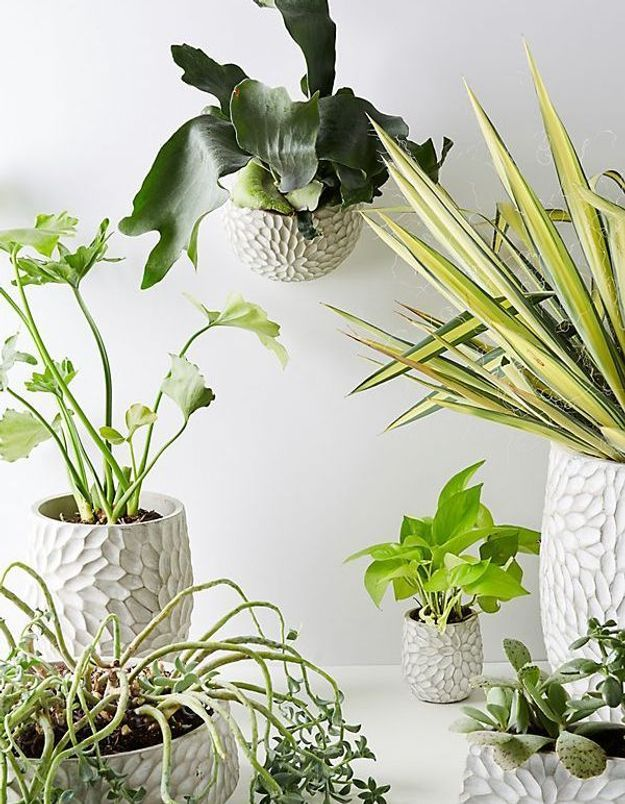 Pot à chrysanthème Anthropologie