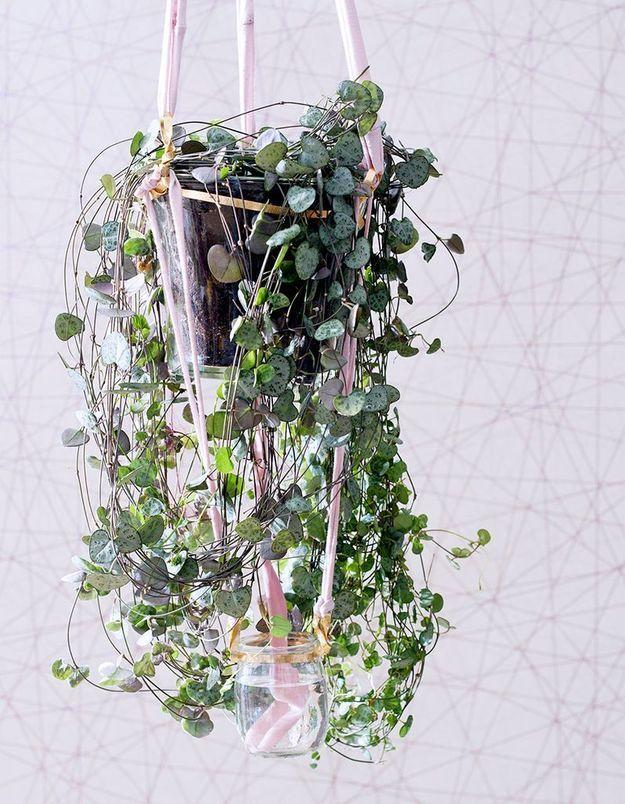 Zoom sur une plante résolument romantique : la Chaîne des Cœurs