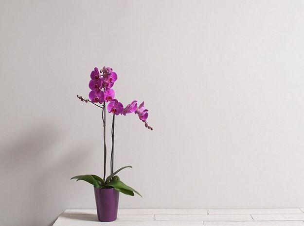 Tout Savoir Sur Le Langage Des Fleurs Elle Decoration
