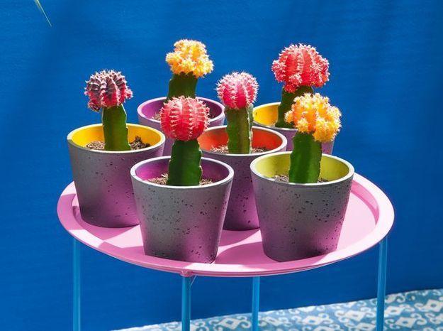 Un cactus comme touche de couleur