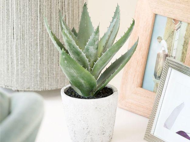 Un cactus dans la bibliothèque