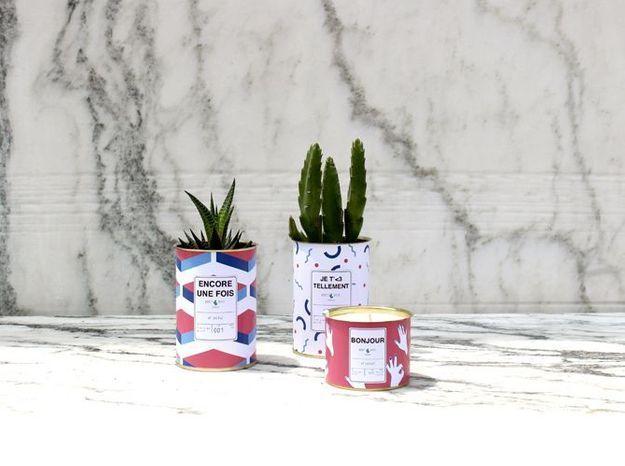 Un cactus en cadeau original