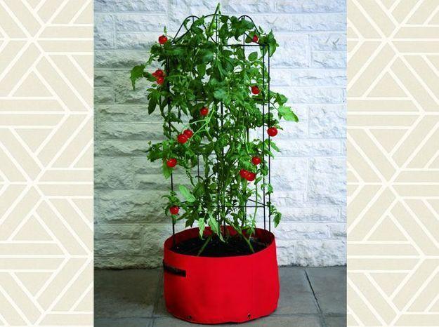 Sac Potager Tomates
