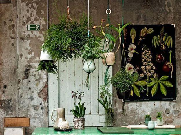 Forêt tropicale avec pots suspendus