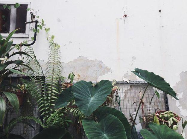 Forêt tropicale contre un mur décrépi