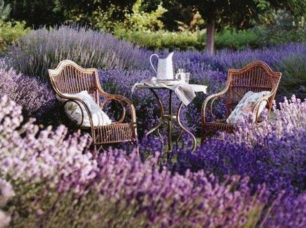 Jardin anglais à la lavande