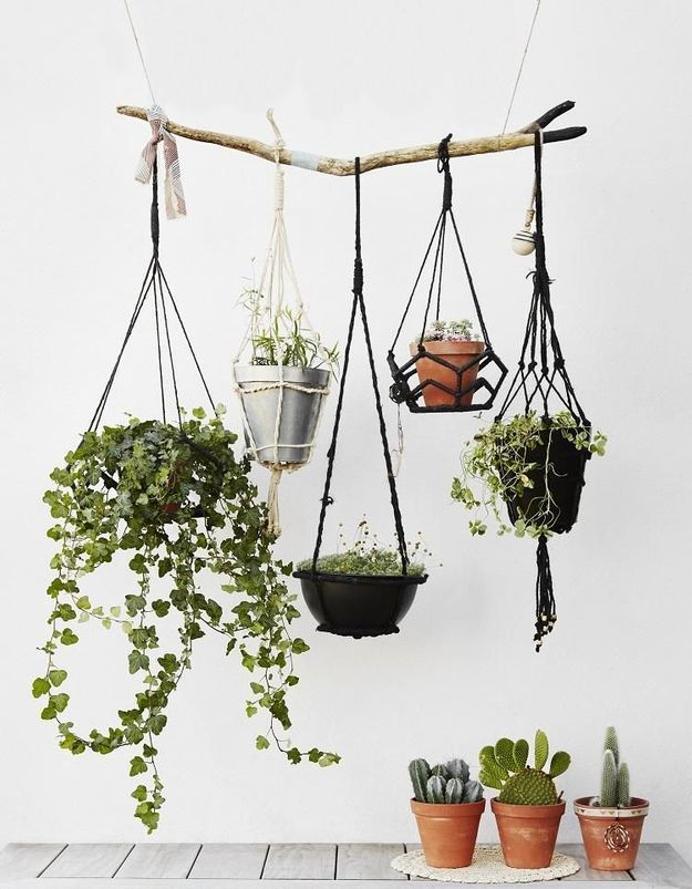 Accrocher des pots suspendus à une branche pour un effet nomade