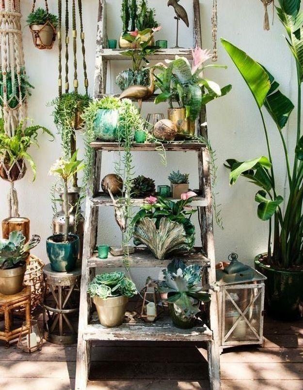 Accumuler les plantes sur une échelle pour une déco végétale originale