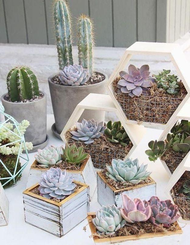 S'aménager un mini terrarium hexagonale pour végétaliser design