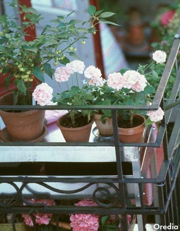 Une terrasse arborée toute l'année