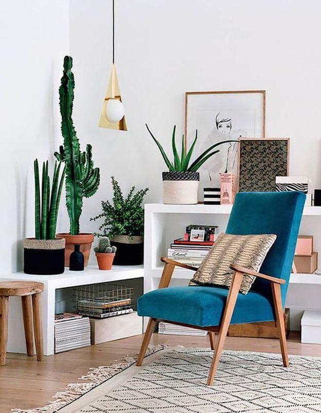 Cactus accumulés dans l'angle d'une pièce