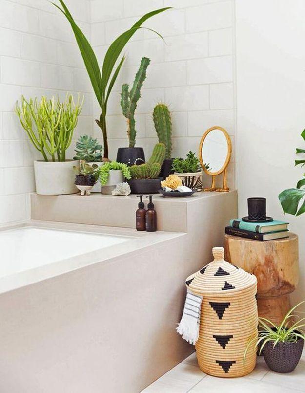 Cactus accumulés dans la salle de bains