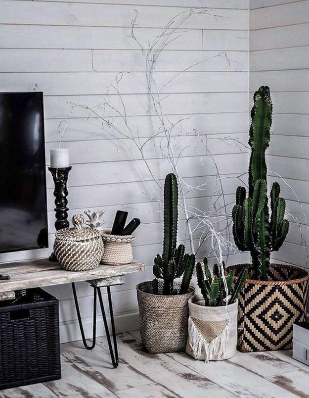 Cactus dans des paniers ethniques