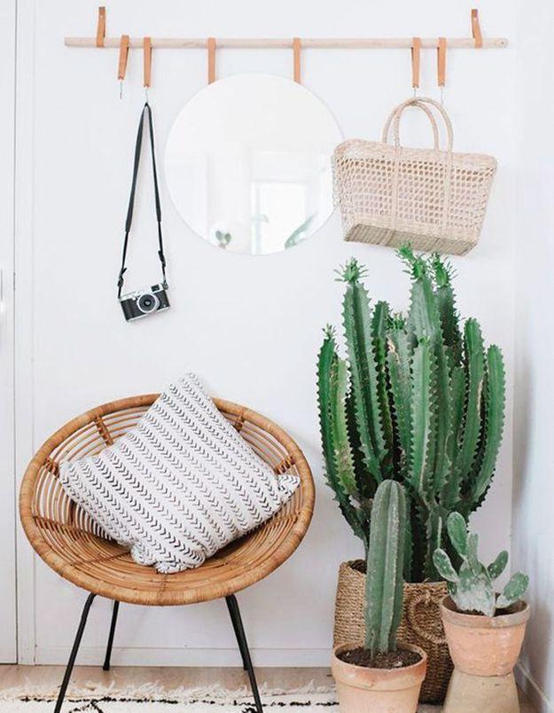 Cactus dans l'entrée