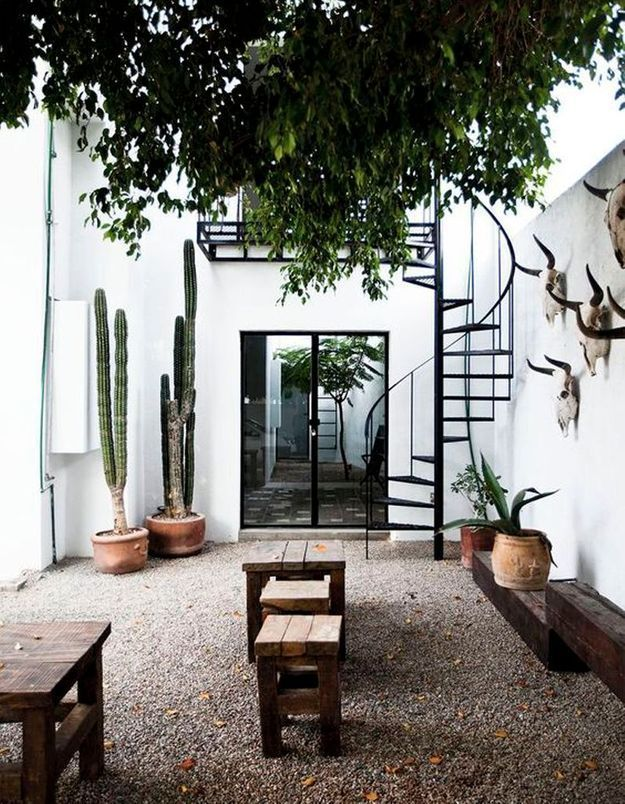 Cactus dans le jardin