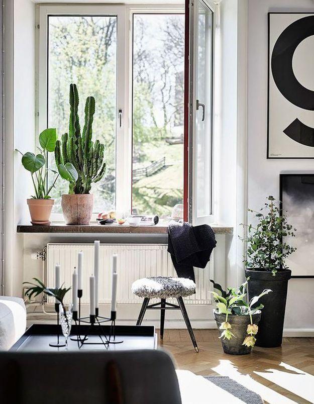 Cactus dans un salon monochrome