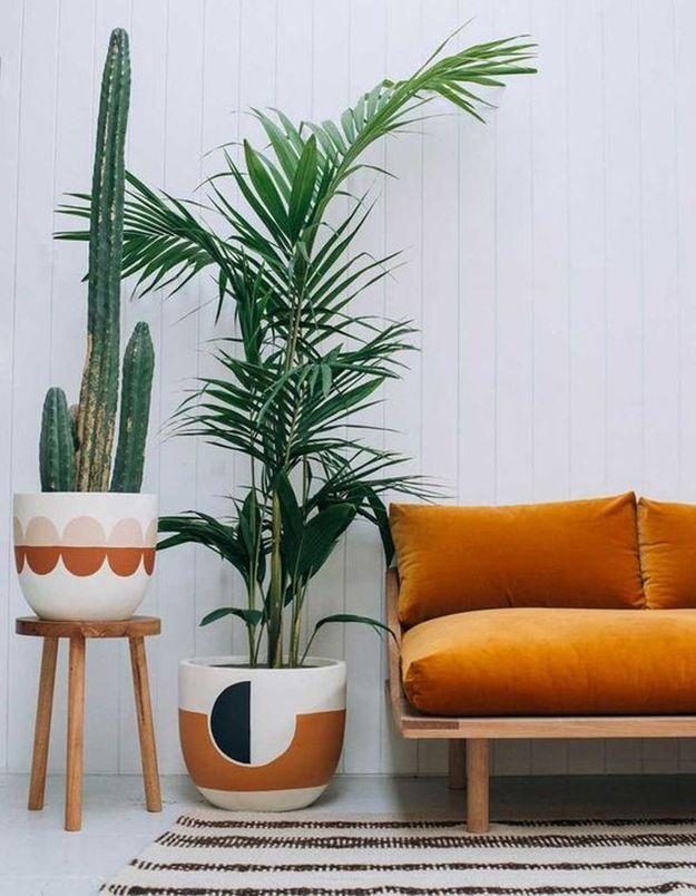 Cactus posé sur un tabouret