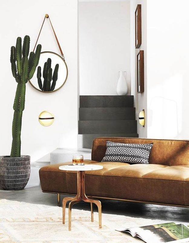 Cactus qui se reflète dans un miroir