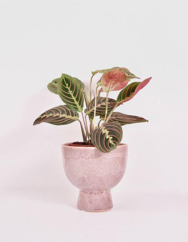 Plante et cache-pot Le Cactus Club