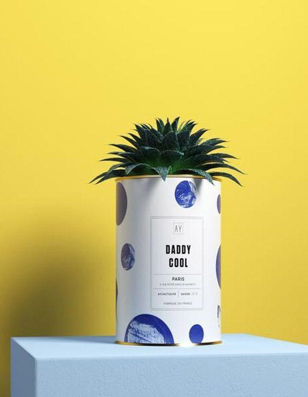 Cactus personnalisable AY Cactus