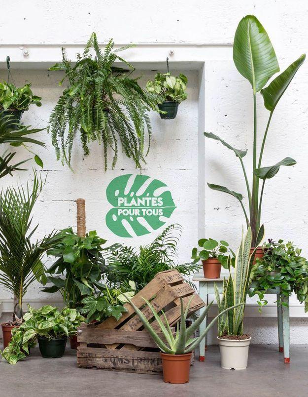 Vente de plantes à 2 € les 30 juin et 1er juillet : l'événement green incontournable