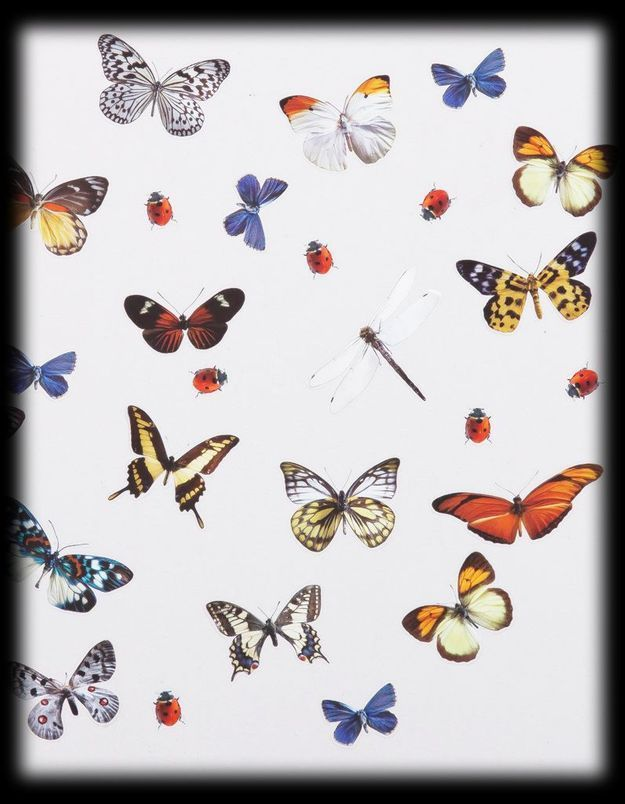 Stickers Papillons 3 Suisses