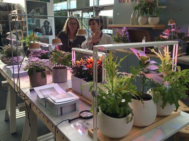 Les leds pour faire pousser vos plantes