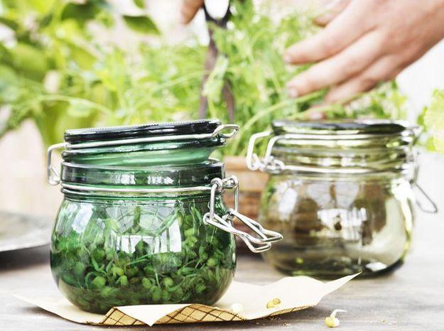 Bocaux Conservation Legumes