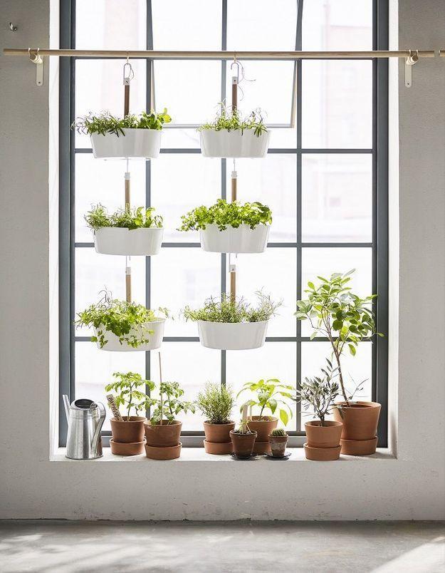 Comment introduire des plantes dans un petit espace sans perdre de place ?