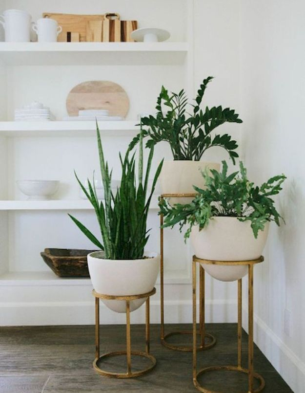 Des pots suspendus pour adopter les plantes dans le salon