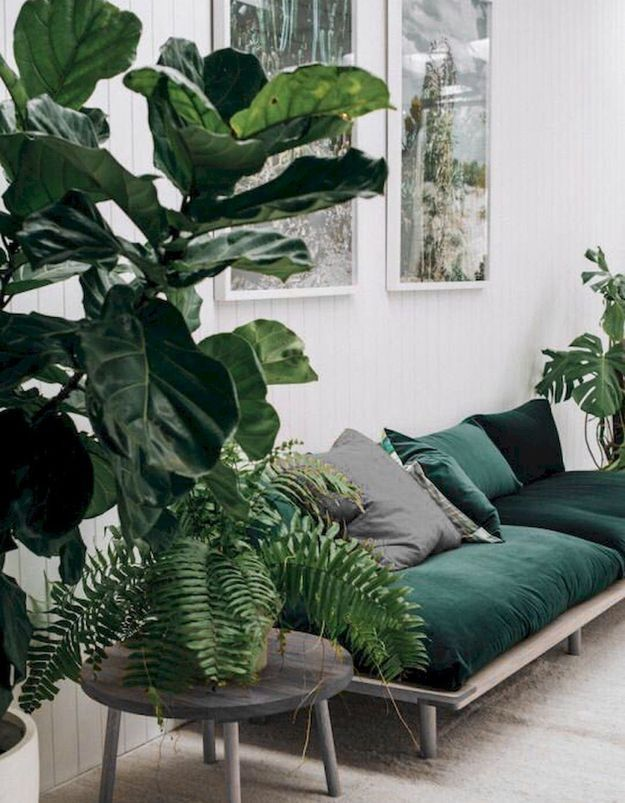Ton sur ton entre plantes et canapé vert en velours