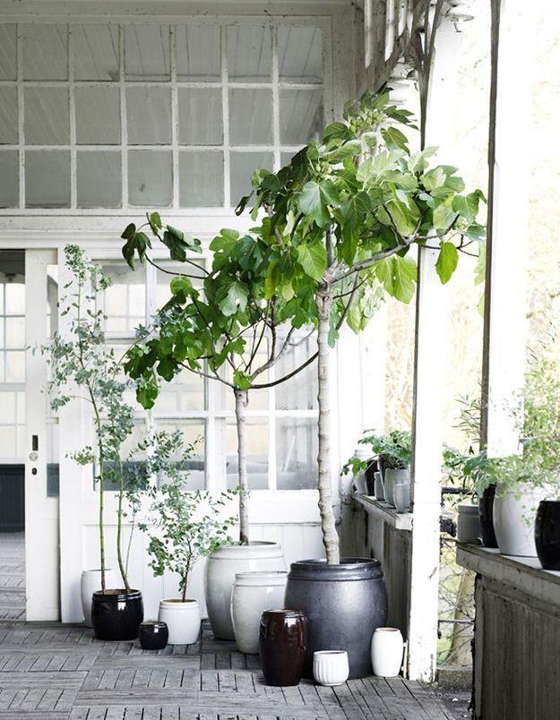 Bichonner son entrée extérieure en faisant la part belle aux végétaux