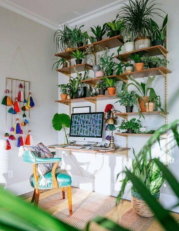 Végétaliser son intérieur sans perdre de place en créant une bibiothèque de plantes