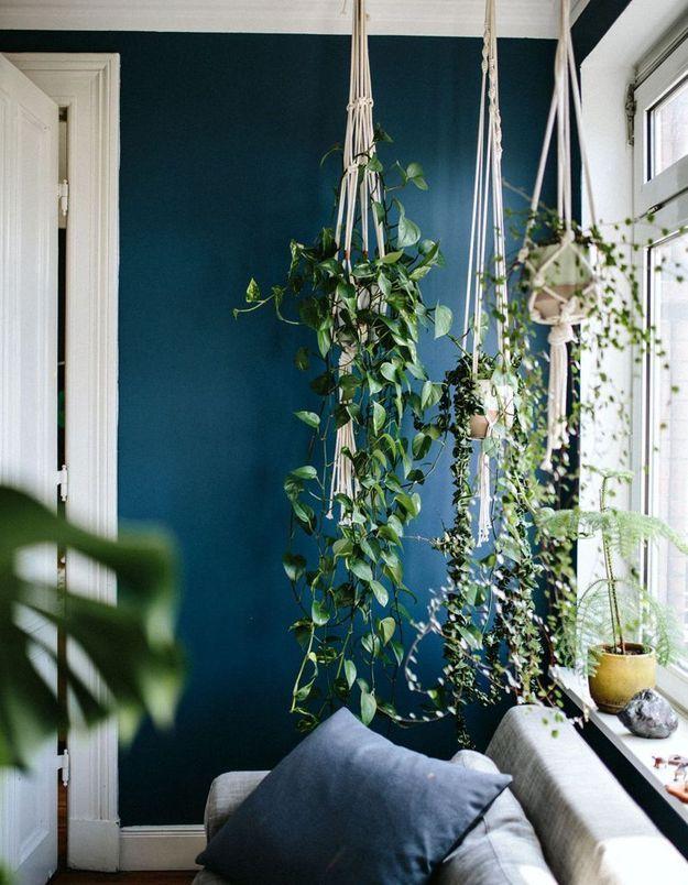 Végétaliser son intérieur sans perdre de place en fixant des crochets au plafond pour suspendre des plantes