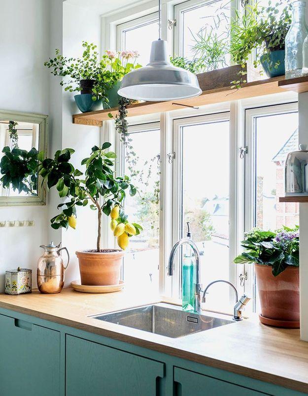 Végétaliser son intérieur sans perdre de place en fixant une étagère ou en suspendant des plantes devant une fenêtre condamnée