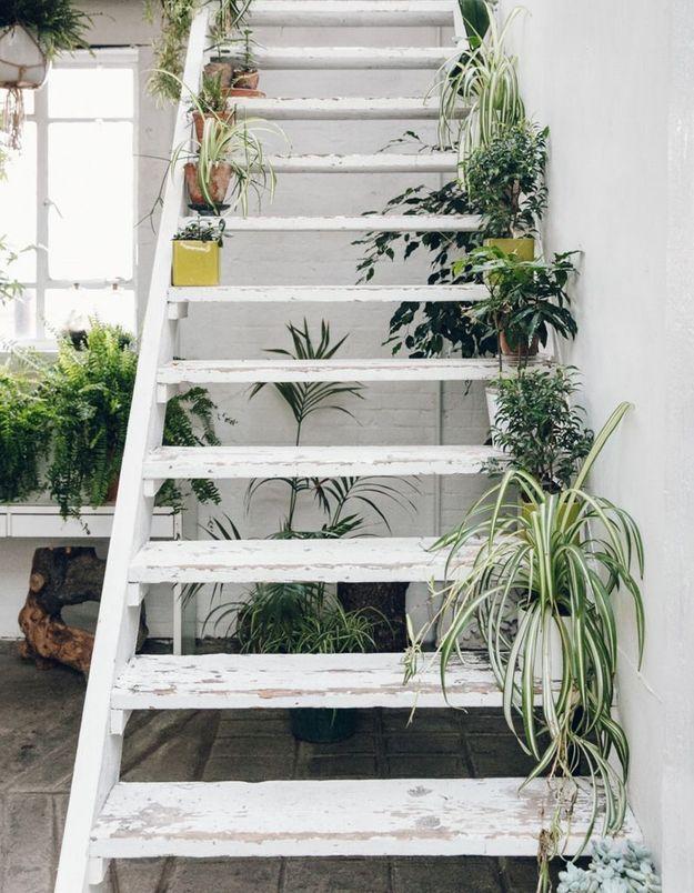 Végétaliser son intérieur sans perdre de place en habillant les marches de l'escalier de petites plantes