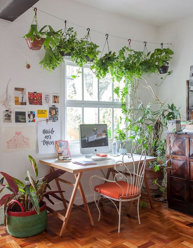 Végétaliser son intérieur sans perdre de place en installant un fil de fer épais entre deux murs
