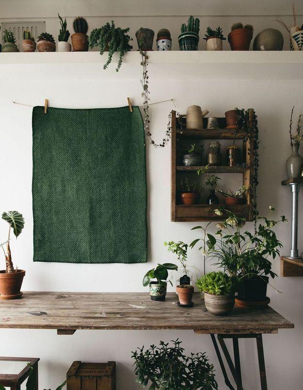 Végétaliser son intérieur sans perdre de place en installant une étagère très haut